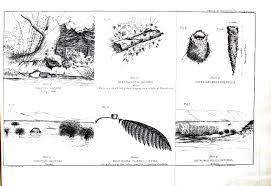 vintage bird nest and eggs print chainimage