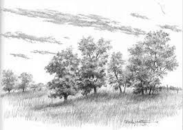mass of trees without foliage drawing nature joshua nava arts