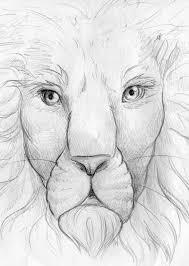 lion face pencil sketch stock illustration image 51695186