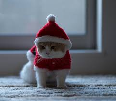 thanksgiving cat gif lonely christmas here is a cute video of hannah youtu be u2026 flickr