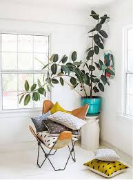 Tall Indoor Plants Low Light How To Keep An Indoor Tree Alive 9homes