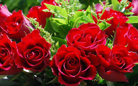 roses for valentines day s day flowers meanings of different colors of roses