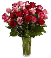 dozen of roses true roses one dozen roses two dozen roses pink roses
