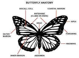 butterfly habitat needs
