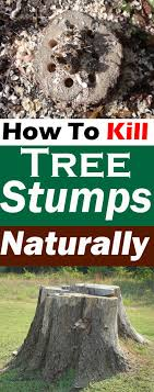 For A Tree Appealing Best Options For Removing Tree From Your Lawn Shallow