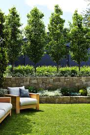 outdoor residential project mosman sydney best privacy trees ideas