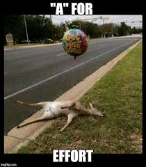A For Effort Meme - image tagged in deer funny get well soon balloon balloons sympathy
