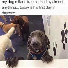 Anxiety Meme - anxiety dog meme my favorite daily things