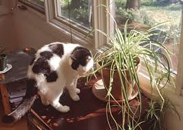 some purr fect greens for indoor cats toronto star