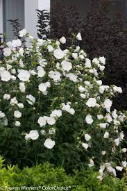 native plant landscaping in new england perennial shade gardens wholesale nursery trees shrubs fern mosses sale online