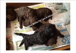 belgian shepherd kempsey the pet care magician elite pet care u0026 education helping pet