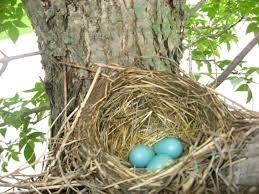 bird nests patches of sunshine