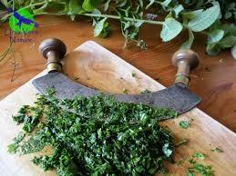 cuisine plantes sauvages cuisiner avec les plantes sauvages stage atelier cuisine a