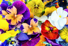 edible flowers for sale canapes with avocado paste and edible flowers stock photo image