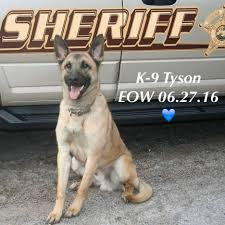 belgian sheepdog rescue illinois indiana k9 tyson dies after tracking suspects law officer