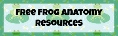 free frog unit study and printables middle year round