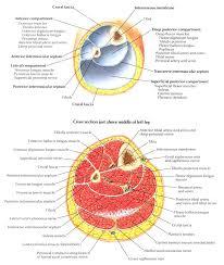 Diagram Of Knee Anatomy Group D