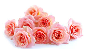 Wholesale Fresh Flowers Saudi Arabia Prices C U0026f For Wholesale Fresh Cut Flowers Eagle