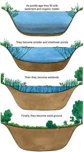 Is A Backyard Pond An Ecosystem Lakes And Ponds U2013 Chapter 9 Texas Aquatic Science