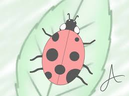 how to draw a ladybird 8 steps with pictures wikihow