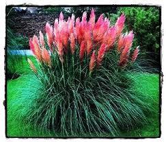 1627 best pssst grass images on garden grass