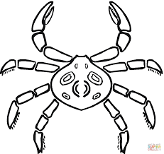 crab that looks like a spider coloring page free printable