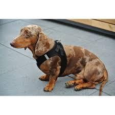 my curli curli dog harness air mesh black petsonline