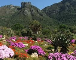 Kirstenbosch Botanical Gardens Kirstenbosch Botanical Garden The Most Beautiful Botanical