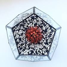 Stained Glass Vase Amazon Com Large Terrarium Dodecahedron Stained Glass Vase