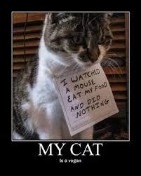 Good Cat Meme - good guy cat meme by memetomeme memedroid