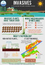 invasive non native plants ballona wetlands restoration project u2013 ballona infographics