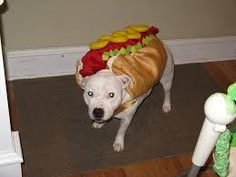 rafiki halloween costume hotdog dogs dress up as hotdogs for a tasty halloween photo