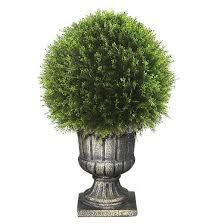 upright juniper topiary tree in a decorative urn 27 target