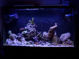 stunner led aquarium light strips mark u0027s 40 gallon breeder page 6 the reef tank