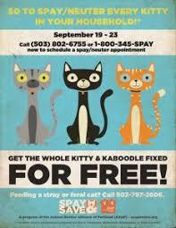 kitty u0026 kaboodle spay u0026 save