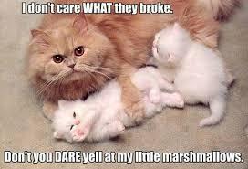 Persian Cat Meme - 50 cat memes grab bag edition cattime