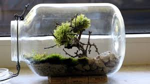 bonsai moss tree terrarium