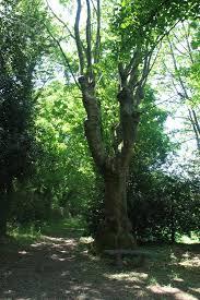 chambre d hote pontcharra parc jardin arbres château le clément gîtes chambres d hôtes
