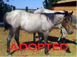 mustang adoptions idaho rescue identify abuse rescue rehabilitate educate