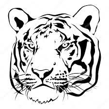 imagen blanco y negro en illustrator cabeza de tigre blanco y negro vector vector de stock jirawat