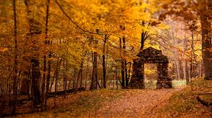 Small Wallpaper by Find Out A Small Gate In Autumn Forest Wallpaper On Http