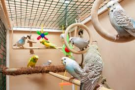 accessori per gabbie gabbie per pappagalli guida alla scelta tutto ze