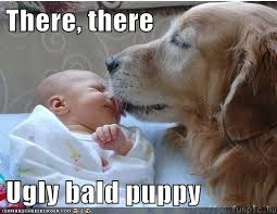 Golden Retriever Meme - ugly bald puppy i has a hotdog dog pictures funny pictures