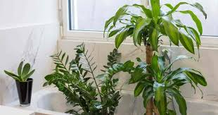 17 best bathroom plants how to use how to choose no light or