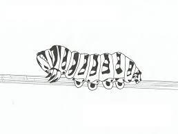 caterpillar coloring pages pixelpictart com