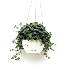hanging plant holders lowes complementary colors in hanging basket