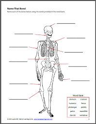 the human body worksheet packet for 1st 3rd graders mamas