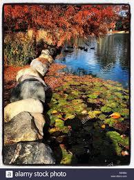 pond goodale park columbus ohio late fall color orange