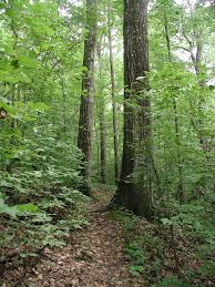 Alabama forest images Friends of shades creek birmingham alabama homewood forest jpg