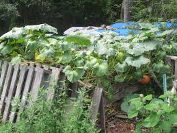 permacultureasheville com a permaculture blog for asheville nc